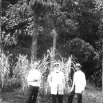 Массандровском парке. Фото 1910 г. Справа А.Ф.Новичков..